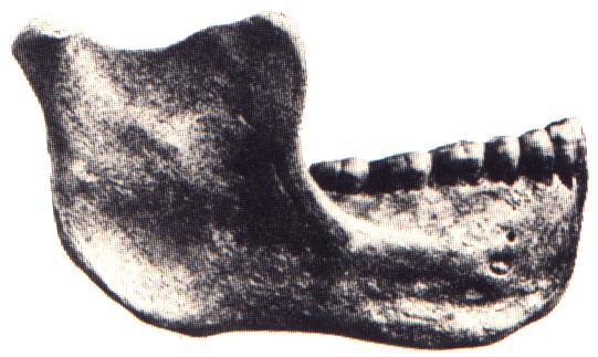 Homo Gardarensis