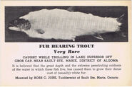 Fur-bearing-trout