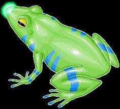 Flashlight Frog