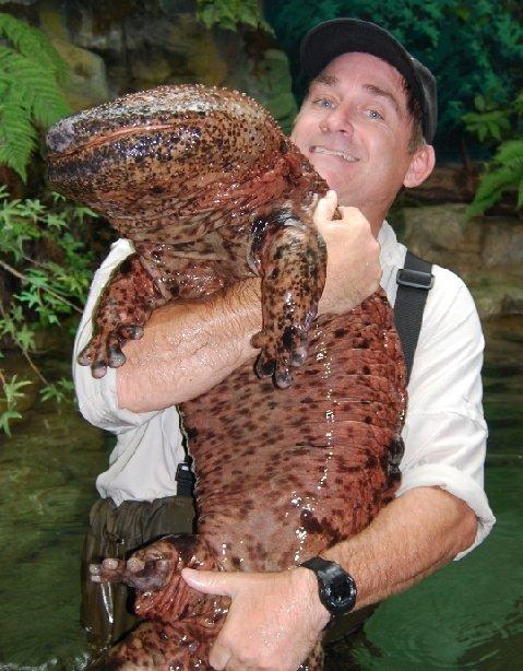Trinity Alps Giant Salamander