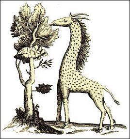 Leopard camel.jpg