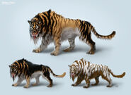 Different Species of Ennedi Tiger (Crypid)