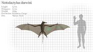 Kongamato Bat