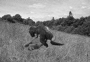 Kasai-rex