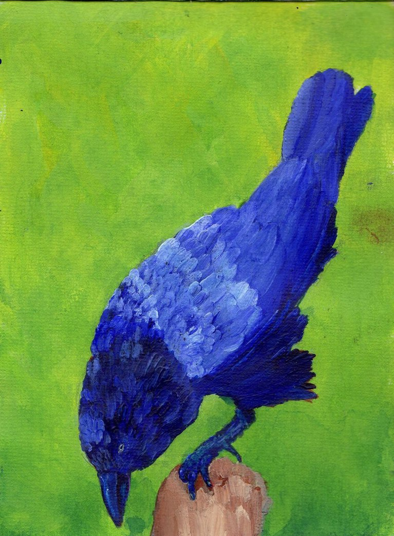 Blue Crow