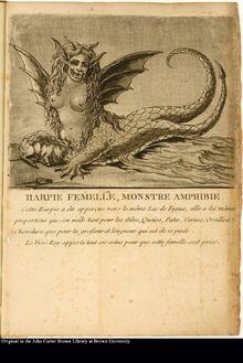 Monster of Lake Fagua .jpg