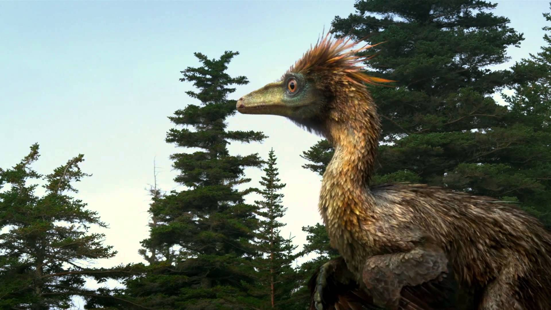 Georgia Raptor