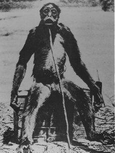 The alleged photo of the De loys ape