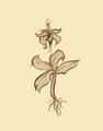 Kwiat Duszy 1