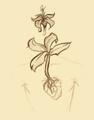 Kwiat Duszy ciało człowieka