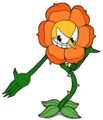 Cagney flower 2