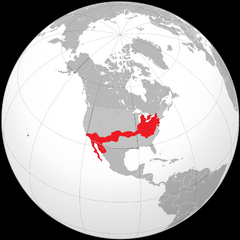 Location of San Stravinsky