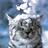 Shadow0Flowers's avatar