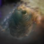 Devilmanozzy's avatar