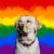 LGBTDog