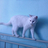 JDBest3's avatar