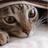 Kuzura's avatar