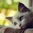 Chat1234's avatar