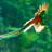 Avatar de RedHawk92