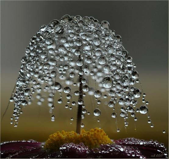 Dewberrylass