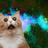 BotCat3's avatar