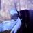 1 daynight 1's avatar