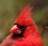 Cardinalpunk's avatar