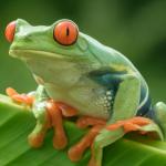 FroggyHollow