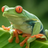 FroggyHollow's avatar
