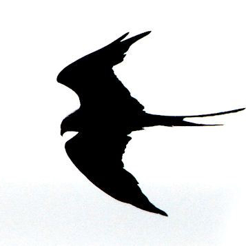 Swallow Tails's avatar