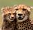 Cheetahrock63's avatar
