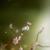 Wildblüte