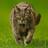 Tigermuts Avatar