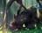 Horizon The All-Wing's avatar