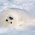Cooper7579's avatar