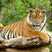 AnimalLover63's avatar