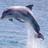 Seashore2345's avatar