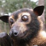 Nocturnus1's avatar