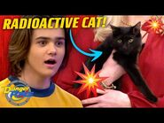 'Radioactive Cat' On The Loose! (New Episode) - Danger Force