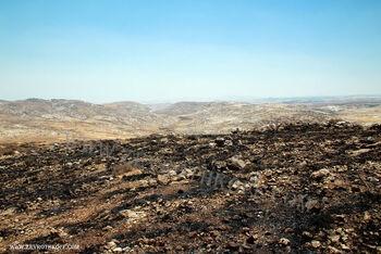 תל א צ'וון. מבט לדרום. הר מונטר ומשמאל אלון באופק