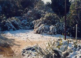 Snow a kdumim 6