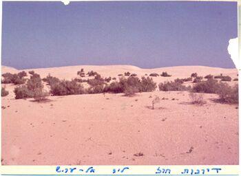 Sand dunes Arish