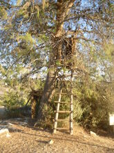 Neot kdumim learn how to build SUCA029