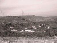 Mount Ebal 456