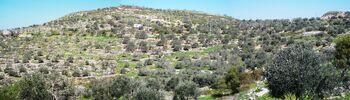 Kedumim view to nord from kerem halevi