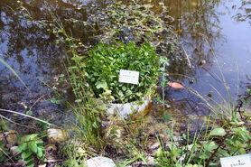 Botanic garden 10