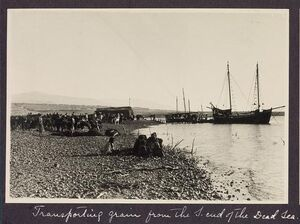 Transporting grain from the S. end of the Dead Sea