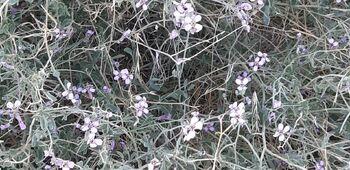 צילומי אולגה אנטין פרח 1