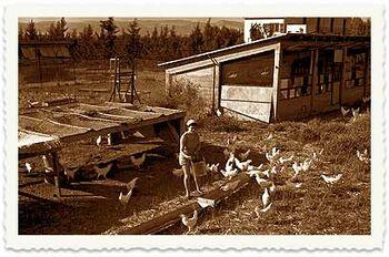 לול התרנגולות משק פועלות ניר העמק