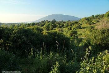 יער בית קשת על רקע הר תבור
